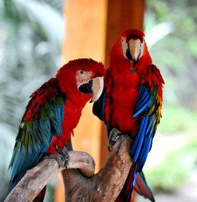Açık artırma ile papağan satacaklar!