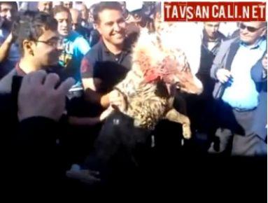 Kulu Civarlarında Öldürülen Kurt -VIDEO-